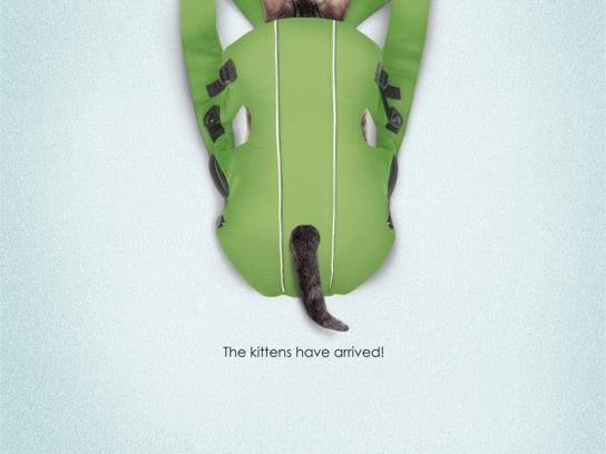 SPCA Print Ad -  Bjorn