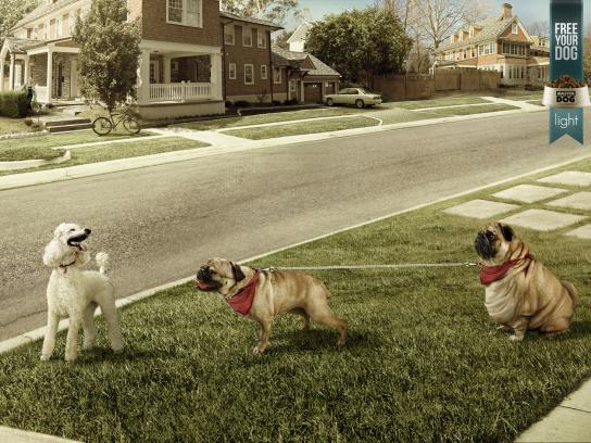 Master Dog Print Ad -  Free your dog, Street