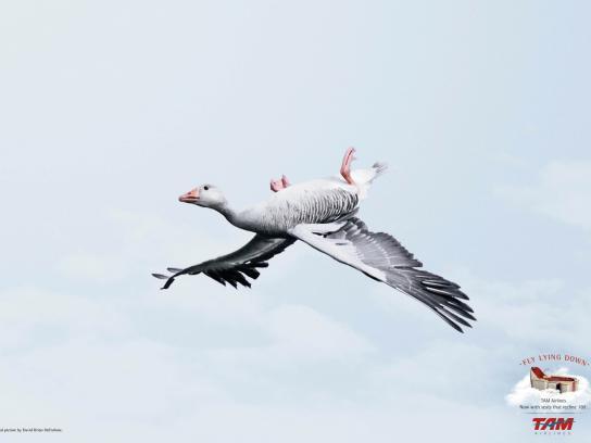 TAM Airlines Print Ad -  Goose