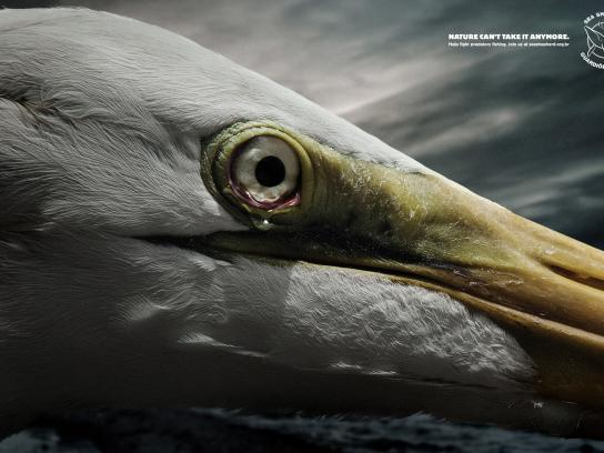 Sea Shepherd Print Ad -  Tears, Egret