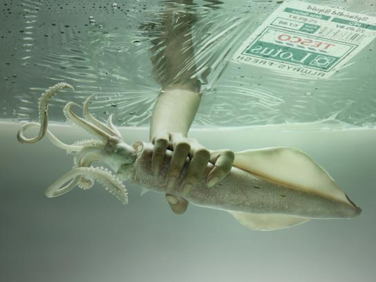 Tesco Print Ad -  Squid