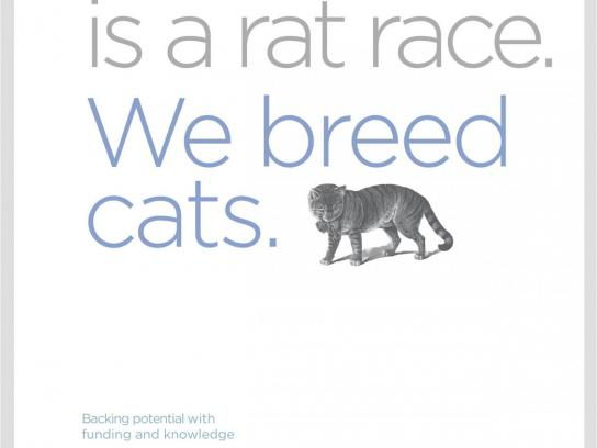 The Namibia Procurement Fund Print Ad -  Cat