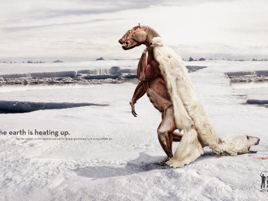 Friends of the Earth Print Ad -  Polar bear