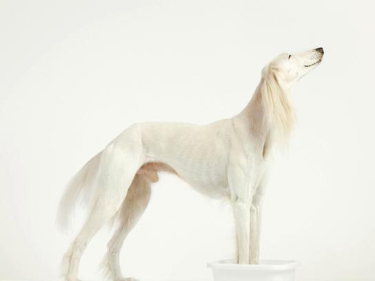 The dog walker Print Ad -  Footbath