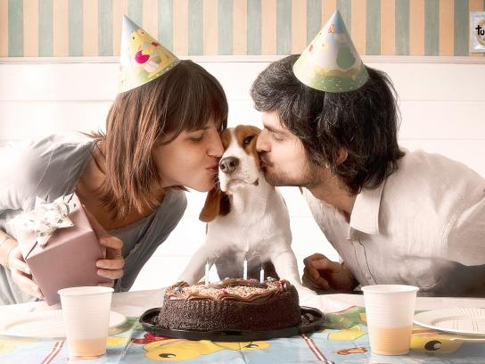 Tulipan Print Ad -  Puppies, Birthday