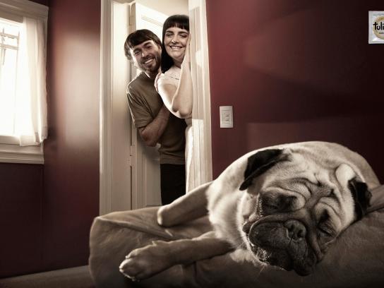 Tulipan Print Ad -  Puppies, Sleeping