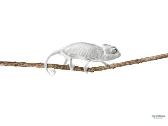 Hogle Zoo Print Ad -  Chameleon