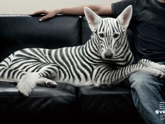 Vipal Print Ad -  Zebra