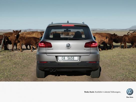 Volkswagen Print Ad -  Cattle