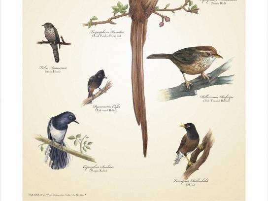 Warai Woods Print Ad -  Birds