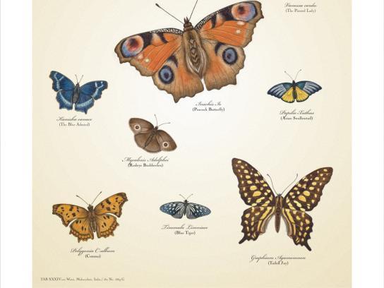 Warai Woods Print Ad -  Butterflies