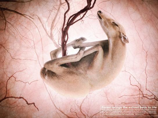 WARF Print Ad -  Deer