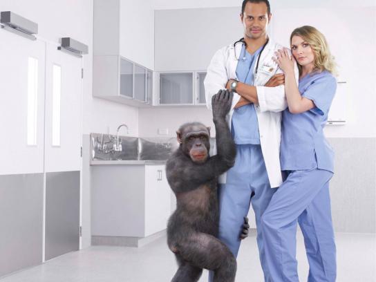 Wellington Zoo Print Ad -  Chimpanzee