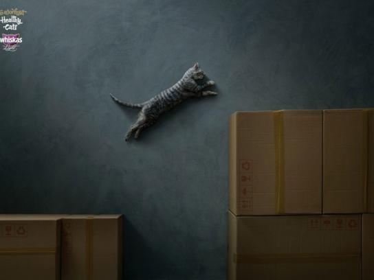 Whiskas Print Ad -  Workout, 3