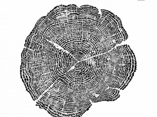 ACRES Print Ad -  Tree Rings