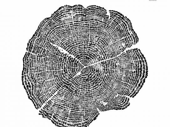 ACRES Print Ad -  Tree Rings