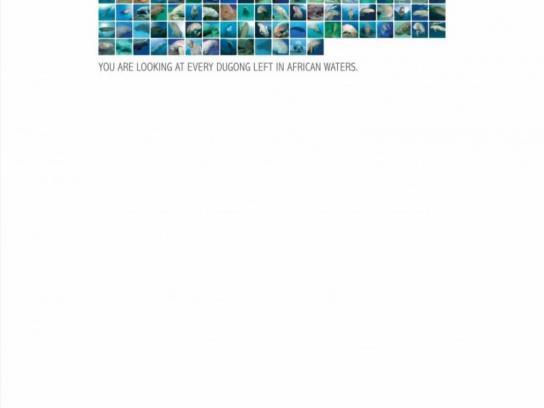 Endangered Wildlife Trust Print Ad -  Dugong