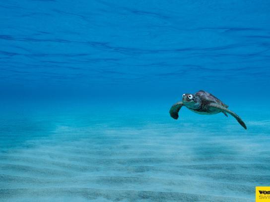 Wonderbra Print Ad -  Sea turtle