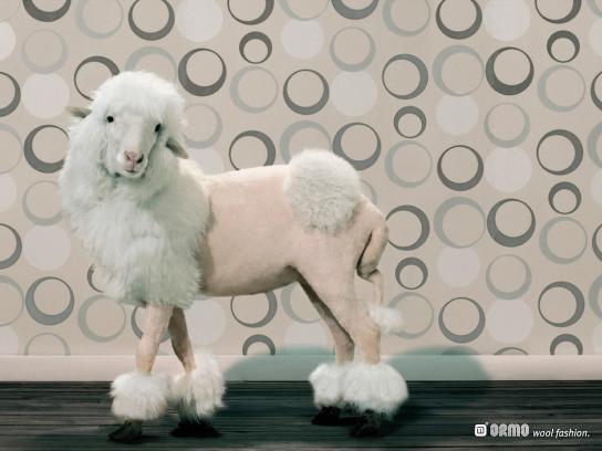 Wool Fashion