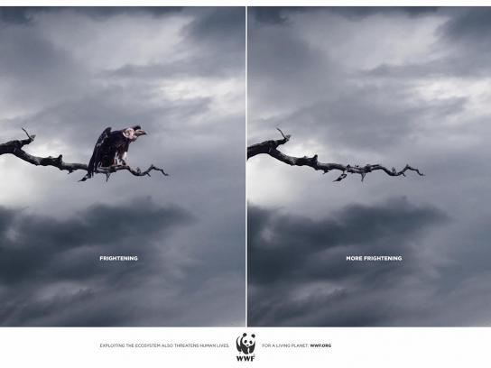 WWF Print Ad -  Bird