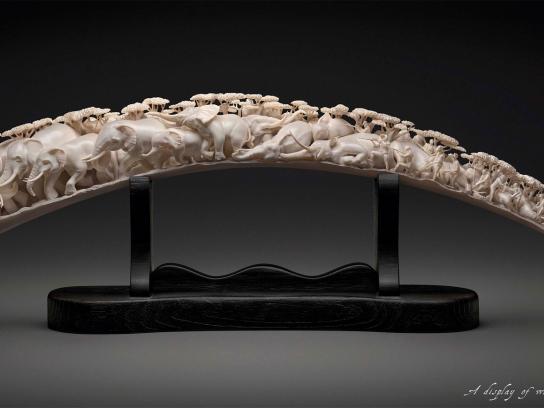 WWF Print Ad -  Ivory