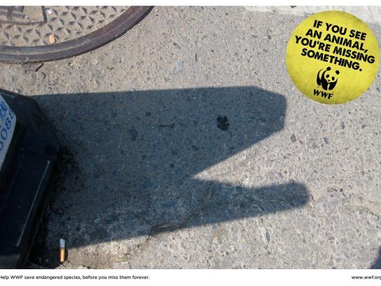 WWF Print Ad -  Moray