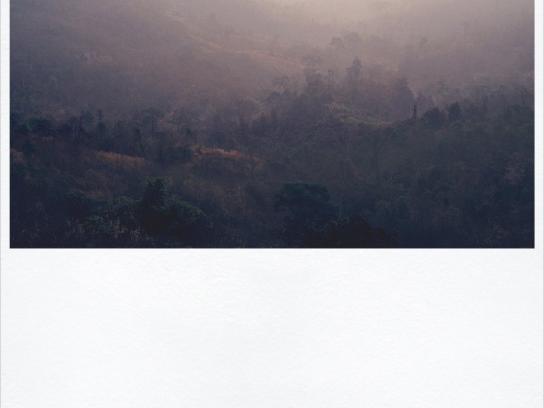 WWF Print Ad -  Rainforest