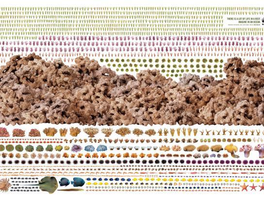WWF Print Ad -  Reef