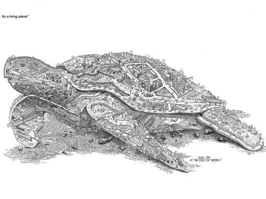 WWF Print Ad -  Turtle