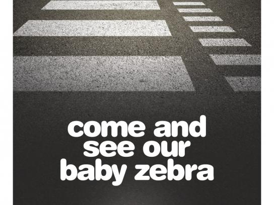 Adelaide Zoo Print Ad -  Baby Zebra