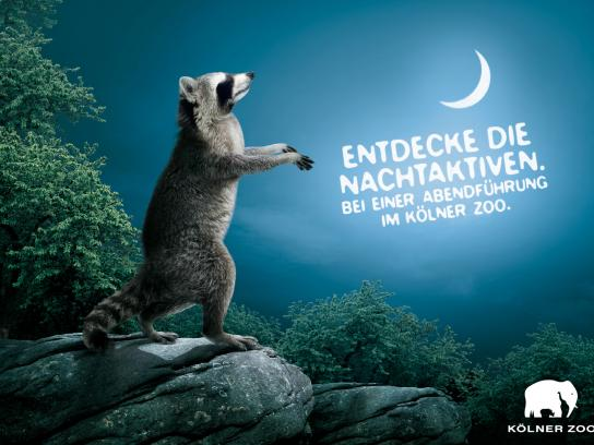 Kölner Zoo Print Ad -  Evening guided tours, 1