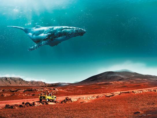 IRT Print Ad - Whale