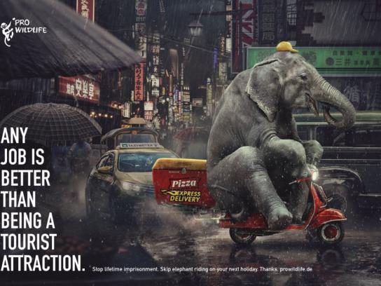 Pro Wildlife Print Ad - Elephant