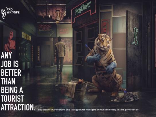 Pro Wildlife Print Ad - Tiger