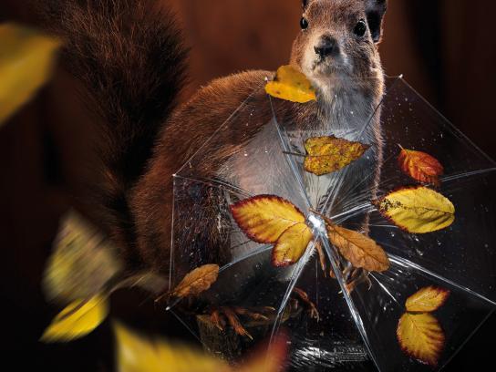 KIA Print Ad -  Squirrel