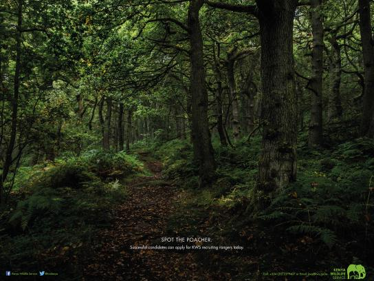 KWS Print Ad - Forest