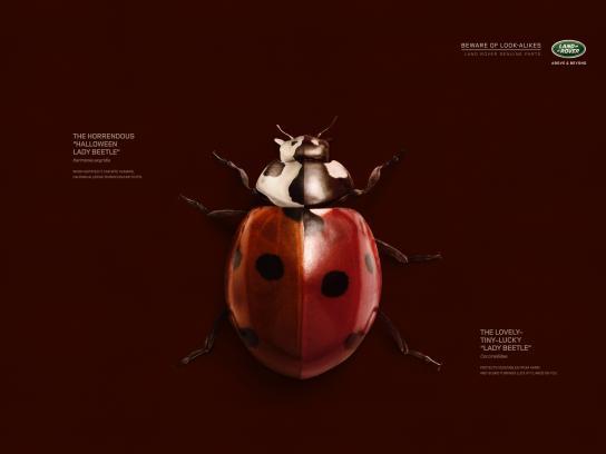 Land Rover Print Ad -  Ladybug