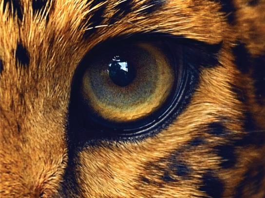 Lavera Print Ad - Lavera Eyeliner - Leopard