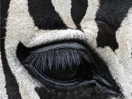 Lavera Print Ad - Lavera Eyeliner - Zebra