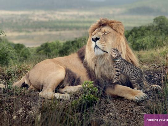 Whiskas Print Ad -  Big Cat-Small Cat, Lion