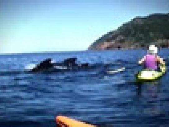 Canadian Tourism Commission Film Ad -  Minke Whales