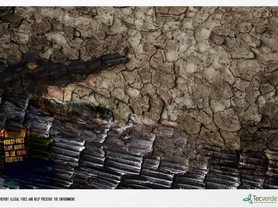 Tecverde Print Ad -  Alligator
