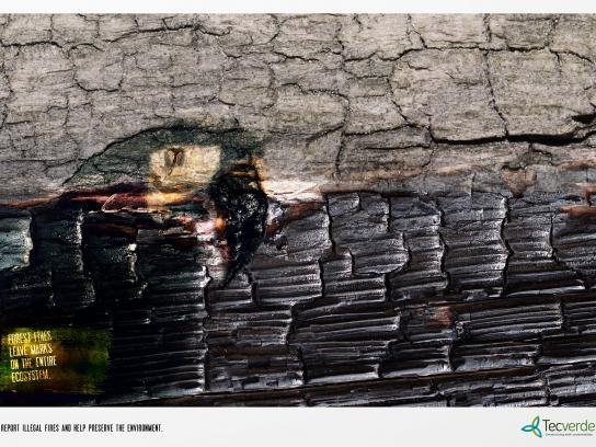Tecverde Print Ad -  Parrot
