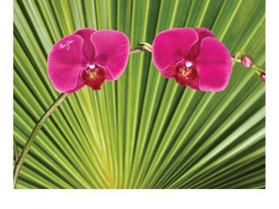 Maui Jim Print Ad -  Flowers