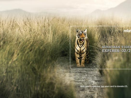 MBNA Outdoor Ad - Expires - Sumatran Tiger