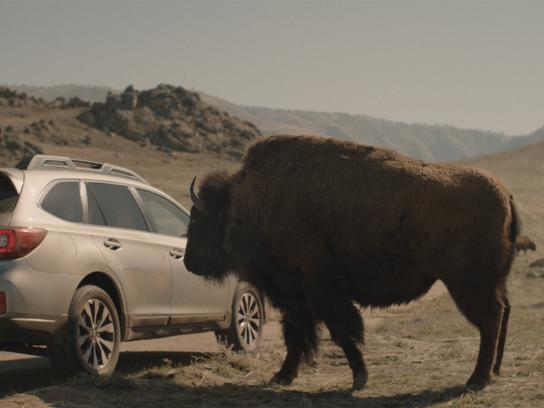 Subaru Film Ad -  Bison