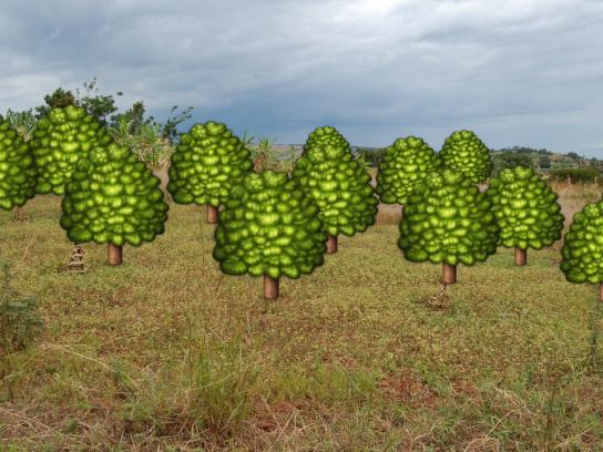 Vi Agroforestry Digital Ad -  Emoji Turns Real