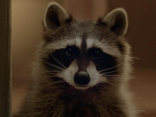 Beeline Film Ad -  Raccoon