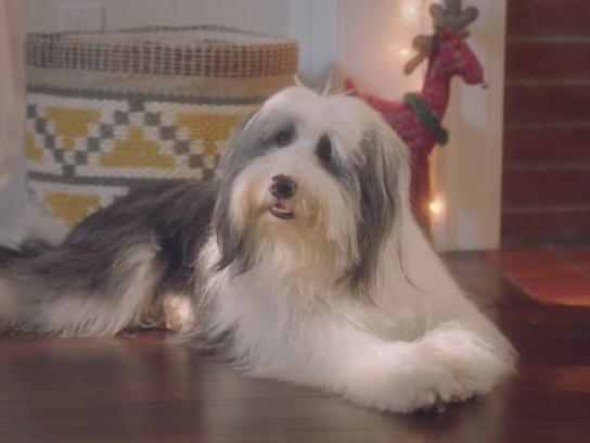 JC Penney Film Ad - Pet_GM