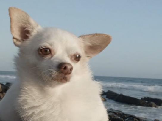 Organic Doggie Treats Digital Ad - Wednesday